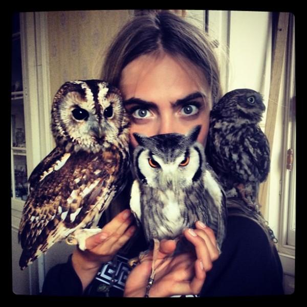 """I am Dr Do-owlittle... Look into my owls!!"" (traduzindo: Sou o Dr. Doolittle... Olho nas minhas corujas!)"