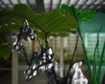 """Obra """"Casa Rino Levi C."""" (c-print metálico, 80cm x 123 cm), de Caio Reisewitz para exposição """"Residência Moderna"""