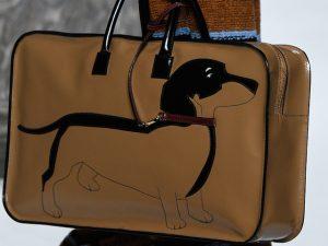 Desejo do Dia: o cãozinho da raça Basset que roubou a cena na semana de moda
