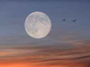 Lua Cheia atinge o auge de seu ciclo, saiba como aproveitar a fase lunar