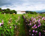A fazenda da família Mul, em Grasse, na França