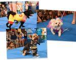 Desfile carnavalesco para os cachorros