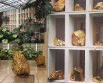 Instalação de pedras vulcânicas banhadas a ouro do artista mexicano Bosco Sodi