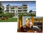 Brenners Park Hotel & Spa será a nova morada do felino Kléopatre