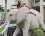 A cantora em cima de elefante que decorou a festa