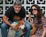 George e Amal Clooney durante visita ao abrigo