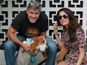 Amal e George Clooney doam mais de US$ 10 mil para abrigo de cães