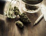 Erva de maconha, legalizada no Colorado desde janeiro de 2014