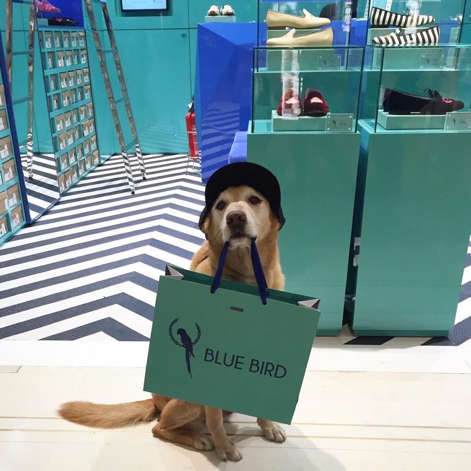 A nova loja da Blue Bird, no Shopping Higienópolis || Créditos: Divulgação