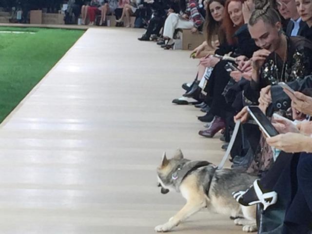 Leo, um pouco assustado, na primeira fila da Chanel  ||  Créditos: Reprodução Instagram