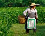 Matueté e Talchá armam o Roteiro do Chá na China. Vamos?