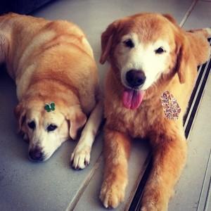 Um casal de pets bem fofo faz sucesso no Instagram. A globette dona deles é…