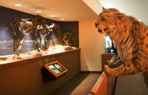 Museus fantásticos onde você pode passar a noite cercado de cultura