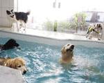 """Cachorros """"paulistanos"""" podem curtir o Carnaval com piscina, playground e acupuntura"""