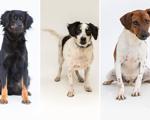 Parque Villa-Lobos recebe feira de adoção com mais de 150 cachorros