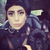 Nova mania de Lady Gaga gera crítica de grupo de proteção animal