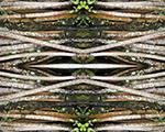 Fragmentos da Mata Atlântica pelas lentes de Cristina Schleder. Confira!