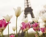 Regime, só amanhã! Três casas de doces para visitar já em Paris