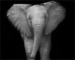 Ateliê da Epiphanie recebe exposição sobre a belíssima fauna africana