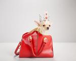 Au au! A vida puro charme dos cães de quatro glamurettes. Vem espiar!