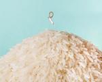 Grão de arroz vira amuleto para noivas por Antonio Bernardo