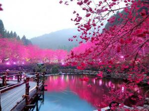 Glamurama revela as 13 árvores mais belas do mundo. Vem ver!
