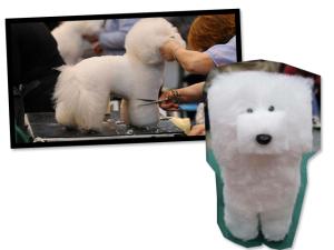 Cachorro ao cubo? É a nova moda nos pet shops do Japão… Vem saber!