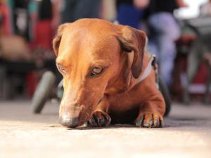 Campanha incentiva a adoção de pets com deficiência
