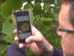 Aplicativo vai ajudar usuários a descobrir nomes de flores e plantas