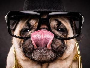 Série de fotos transforma cachorros em astros do hip-hop