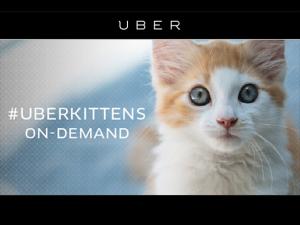 Uber envia gatos para casa de seus usuário para incentivar adoção
