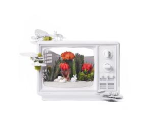 Lá em Casa: arranjos conceituais da floricultura Plant the Future