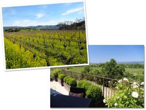 Confira as 6 vinícolas mais exclusivas de Napa Valley, na Califórnia