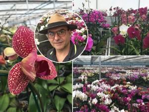 A busca de Renato Aguiar pelas orquídeas perfeitas em Holambra
