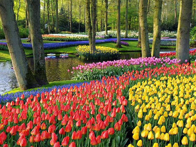 Keukenhof Gardens, Holanda