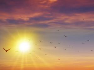 Sol em Leão dá início à fase mais expressiva e generosa do ano