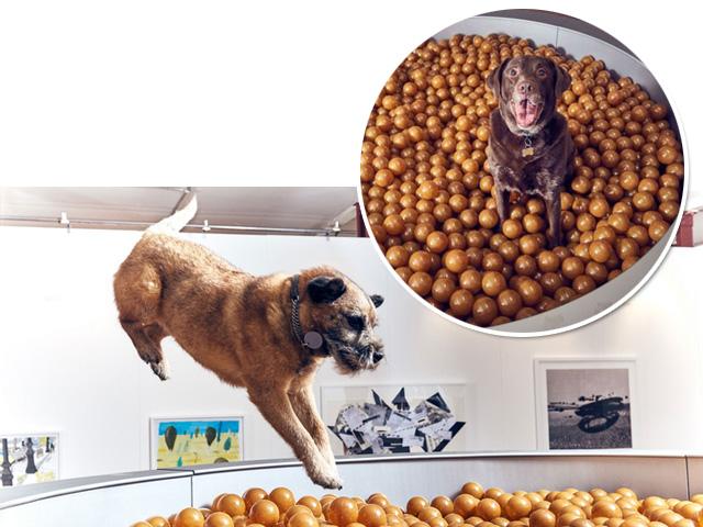Piscina de bolinha para cães || Créditos: Divulgação