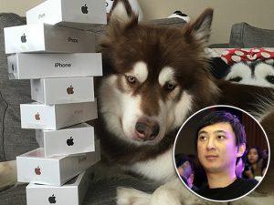Filho de mais rico da China deu vários iPhones 7 para seu cachorro