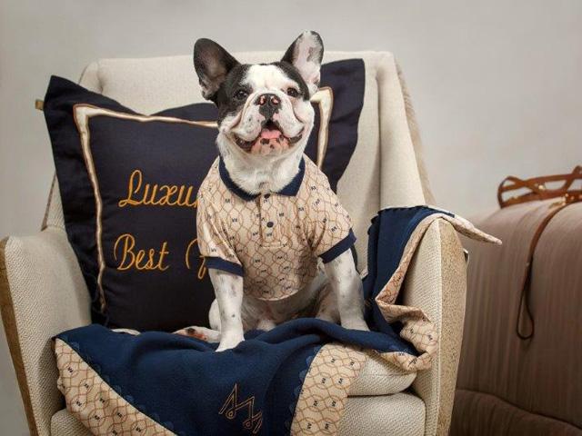 Seu pet merece o máximo de conforto. As mantas e cobertores da Marquesa Shop são ideais contra as baixas temperaturas