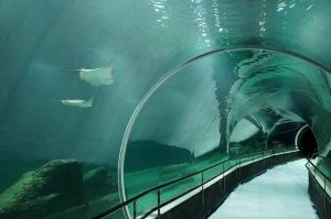 Maior aquário da América do Sul inaugura no Rio com ingressos esgotados