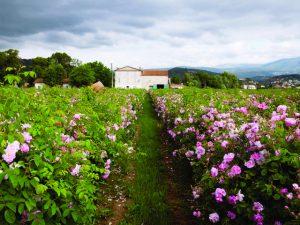 Projeto de linha ferroviária no sudeste da França está na mira da Chanel