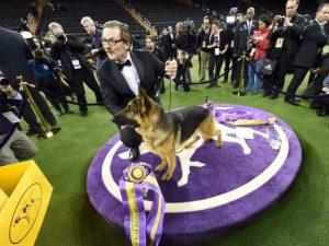 Cadela vence competição famosa nos EUA e é a nova celebridade do país