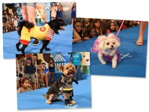 CãoCurso acontece no Pátio Higienópolis com desfile de fantasias para cães