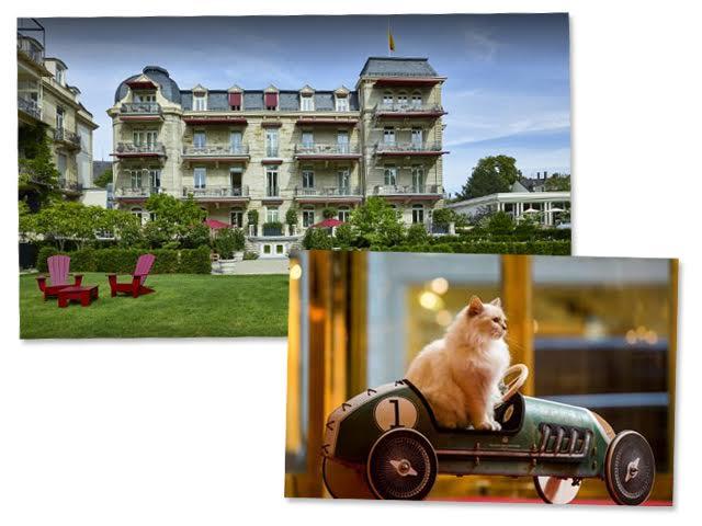 Brenners Park Hotel & Spa será a nova morada do felino Kléopatre || Créditos: Divulgação