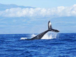 Um rolê pelo Havaí mais autêntico e natural da ilha de Maui. Vem!