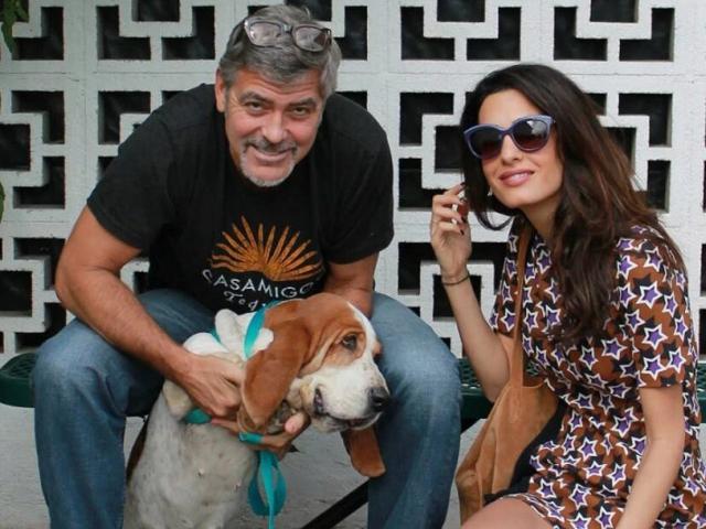 George e Amal Clooney durante visita ao abrigo || Créditos: Camp Cocker Rescue/Divulgação