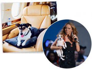 Um diário da vida boa de Cha Cha e Jell E Beans, os cães de Mariah Carey