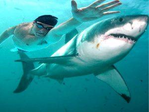 Michael Phelps e o tubarão