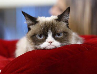 Com 12,5 milhões de seguidores, Grumpy Cat é eleita a pet mais influente das redes