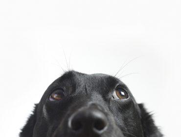 Studio Velocity recebe feirinha de adoção e aula beneficente em prol dos pets